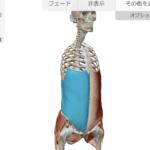【くびれトレーニング】腹斜筋って知ってる?